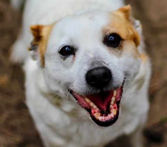 Puszek - przyjazny, niekonfliktowy psiak szuka domu!